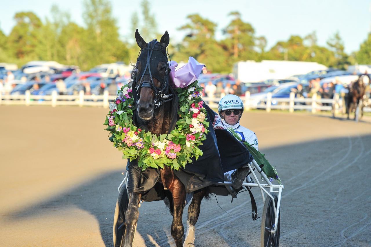 Perfect Spirit vann Gotlandslöpning och eftersom femåringen kom från två raka galoppmisslyckanden var både tränaren Daniel Redén och kusken Örjan Kihlström lättade. Foto: SImon Hagen/Sulkysport