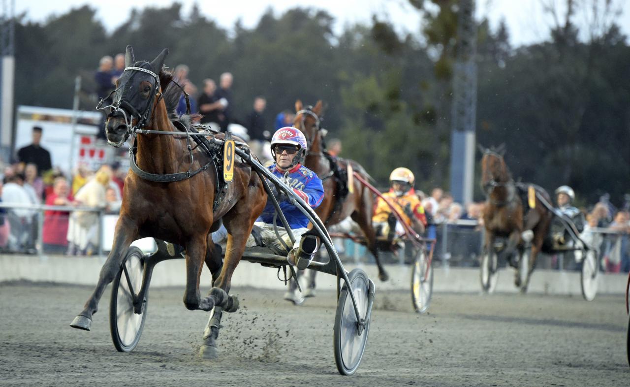 Pinto Bob vann Fyraåringfstestet på Sundbyholm och tar nu helt logiskt sikte på Derbyt. Foto: Martin Langels/ALN