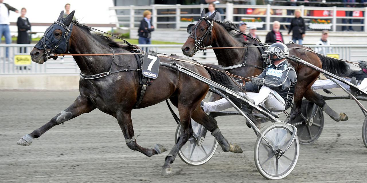 Jag har haft stor tro på den här hästen ända från början, sade Robert Bergh efter segern med Power. Foto Martin Langels/ALN