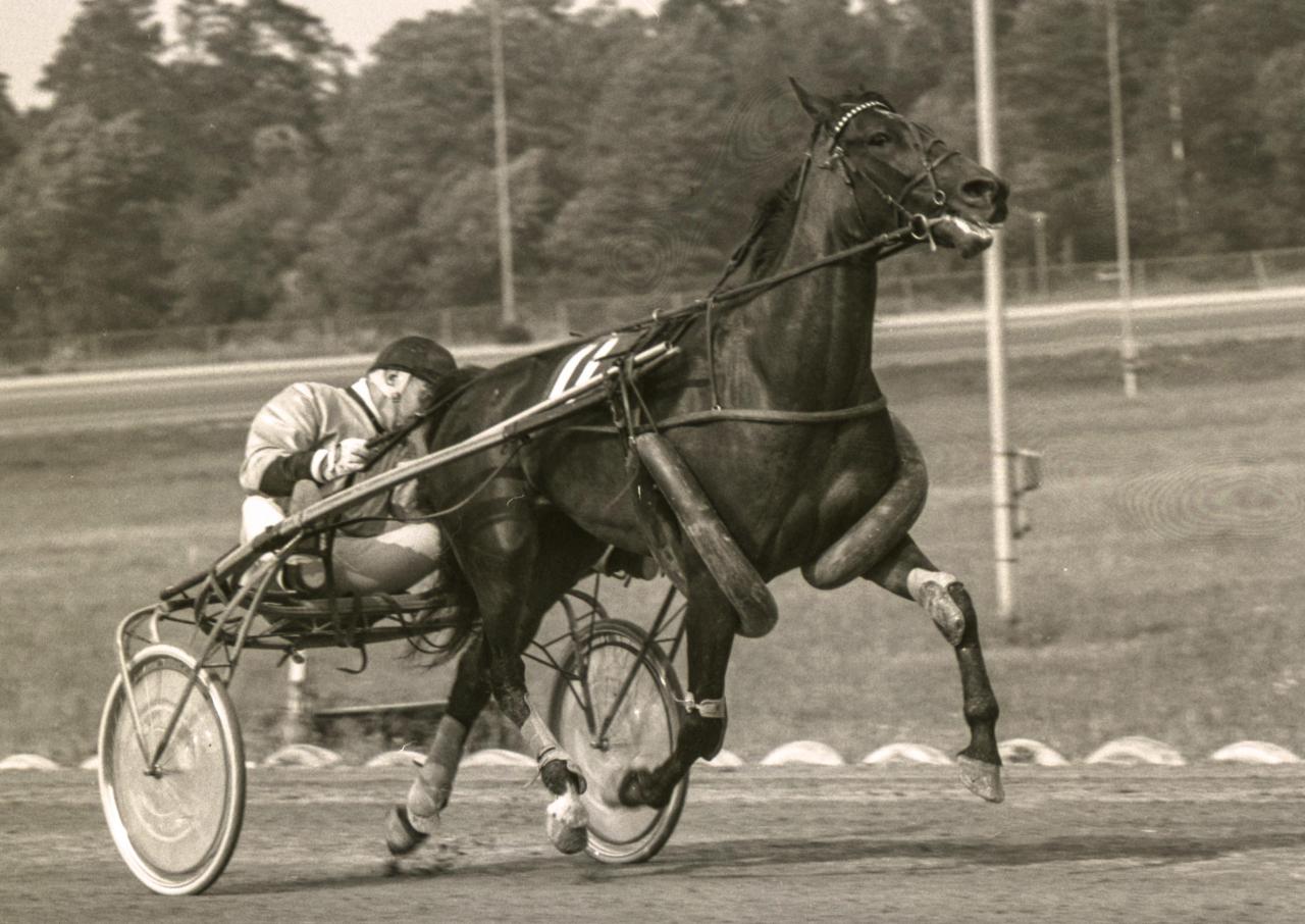Sören Nordin utrustade Regina Roy med stora cykelslangar för att få ordning på hästens säregna framaktion. Foto Stalltz.se