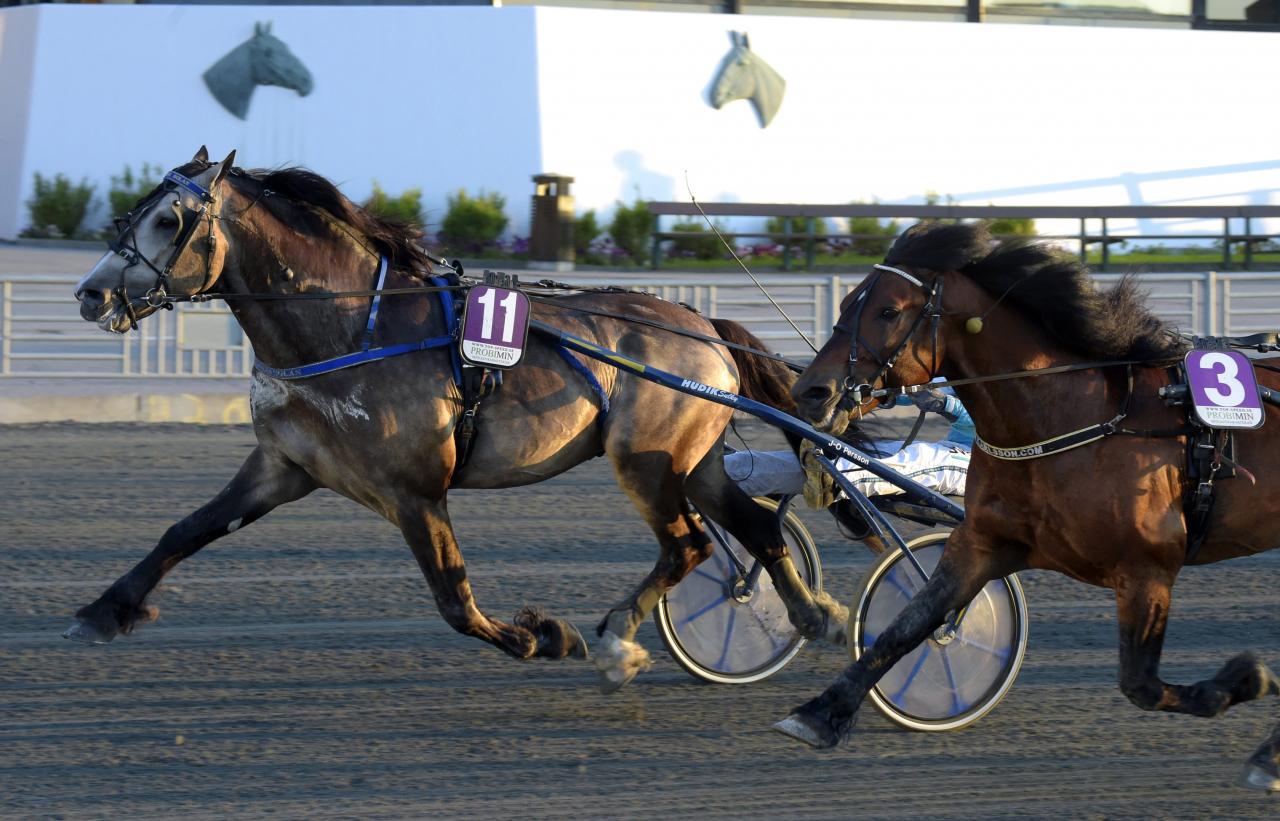 Smedheim Solan vann Hjördis lopp före Tangen Haap i tisdags, men igår konstaterades han skadad. Foto: Martin Langels/ALN