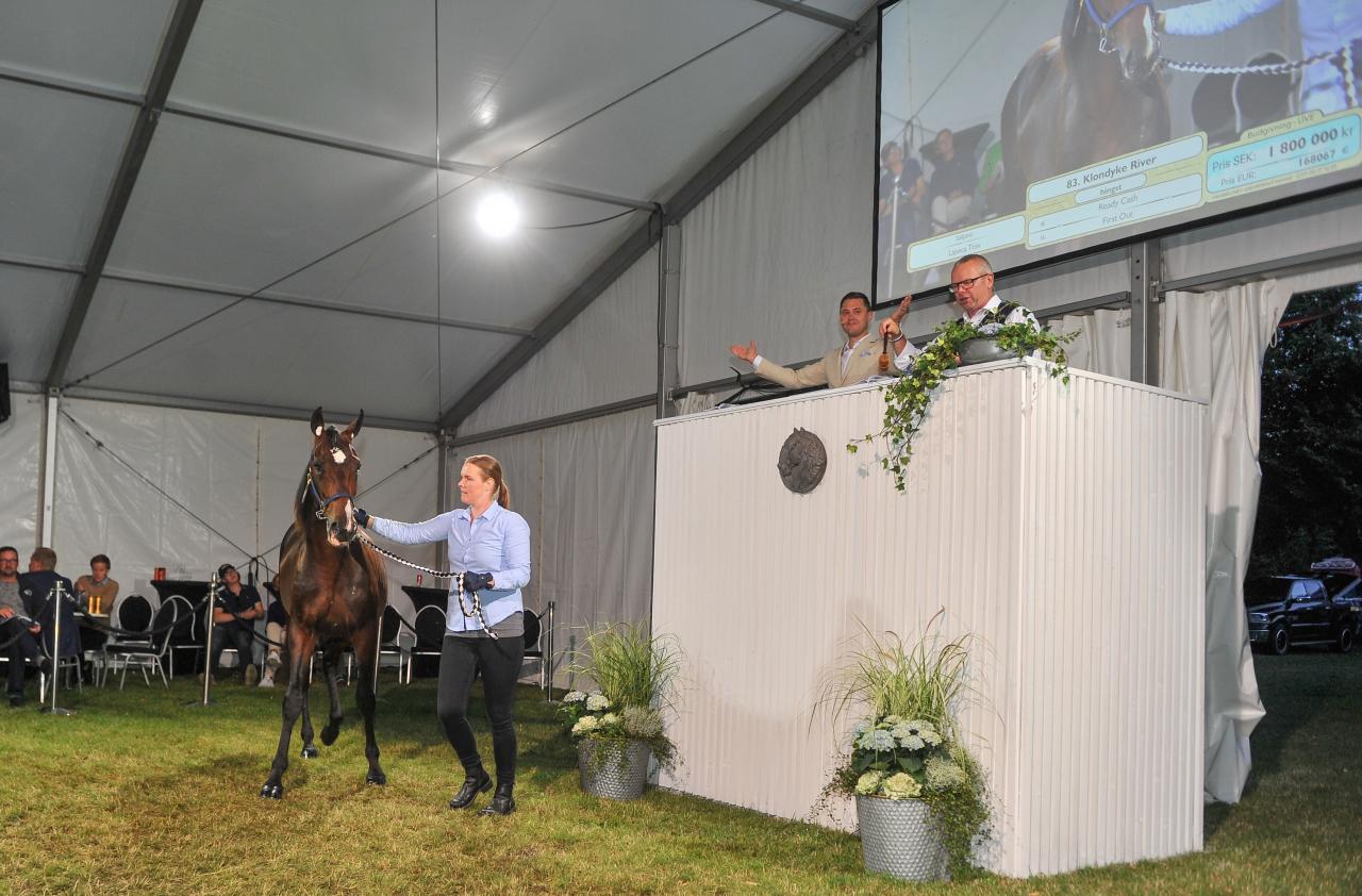 Dyraste hästen på kvällens auktion, Klonkdyke River ropade Peter Untersteiner in. Foto: Simon Hagen