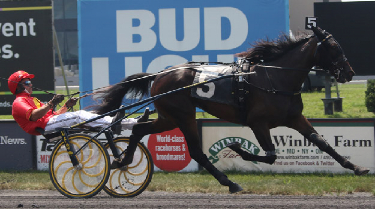 Hypnotic Am kvalade för Brian Sears idag på Pocono Downs. Foto: Lisa Photo