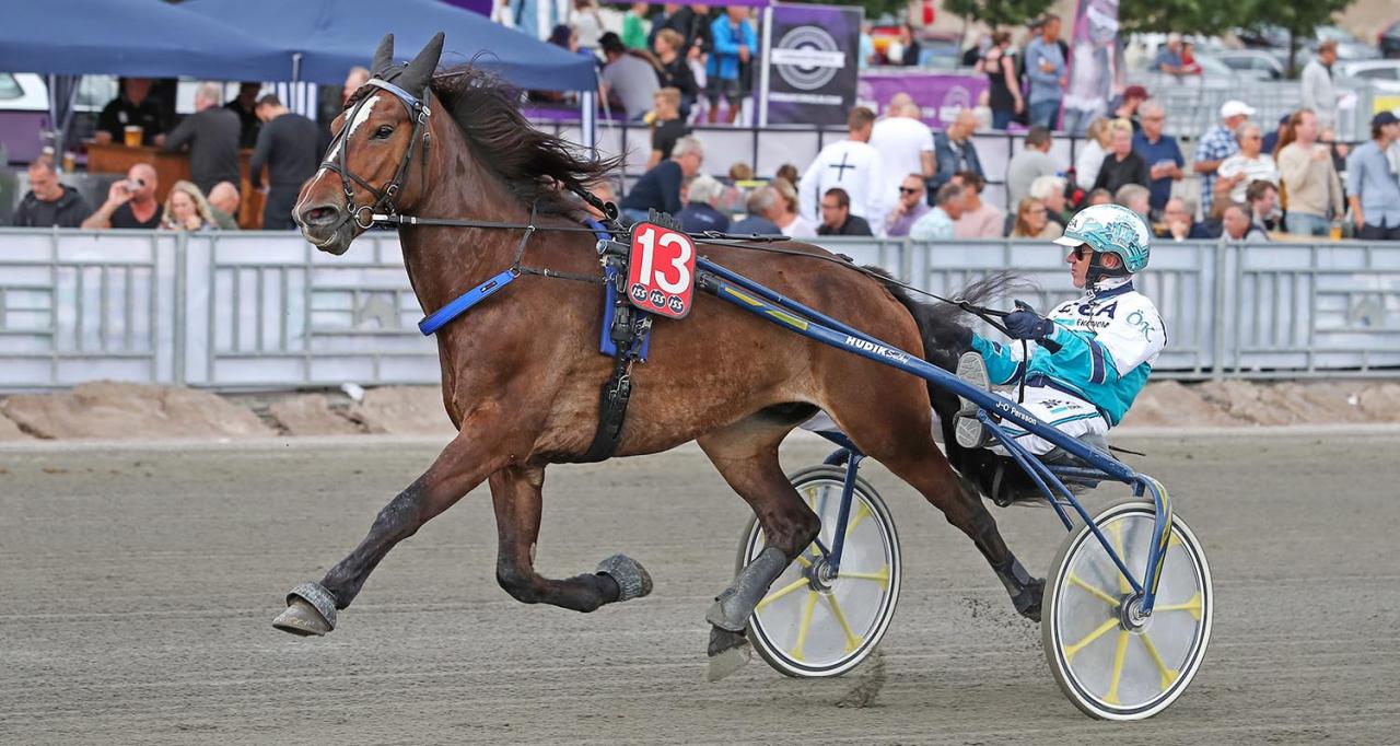 Jan-Olov Perssons Lex Peidei är en av tolv som ska försöka bli Valackfurste. Foto Jeannie Karlsson