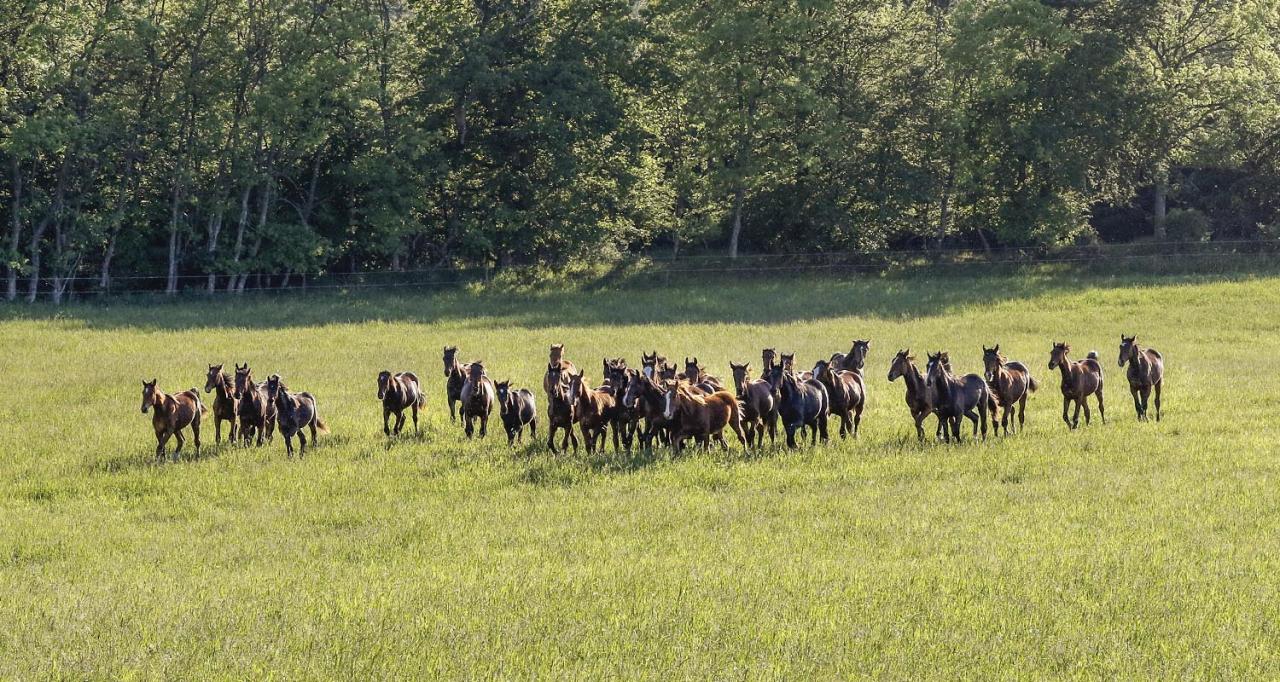 Krönikören ger sin syn på hur aveln skapar snabbare hästar men tänks det på hälsan? Foto Mia Törnberg