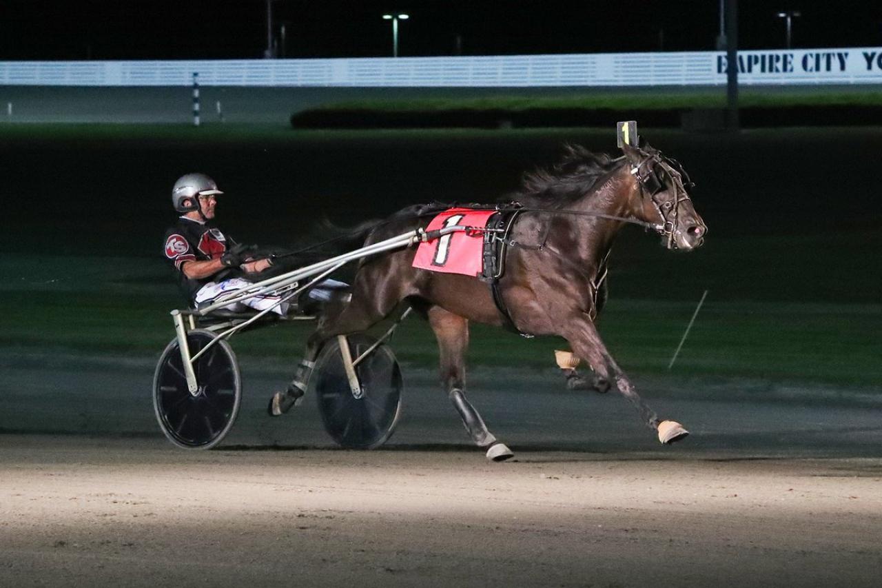 Chaptiama har hittat storform och vann sitt andra raka försök i New York Sire Stakes för Trond Smedshammer igår på Yonkers Raceway. Foto: Mike Lizzi