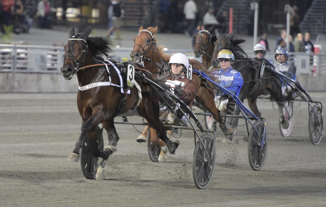 Usain Tilly jagar finalplats i Svensk Uppfödningslöpning. Foto Leif Norberg/ALN