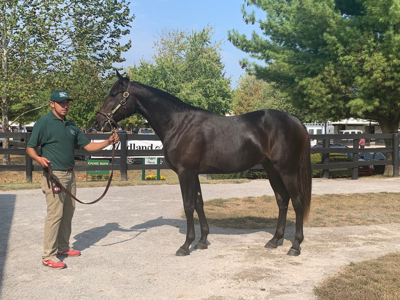 Stall Zet köpte Propulsions helbror Damien för en miljo dollar och går nu i träning till Marcus Melander. Foto: Cane Run Farm