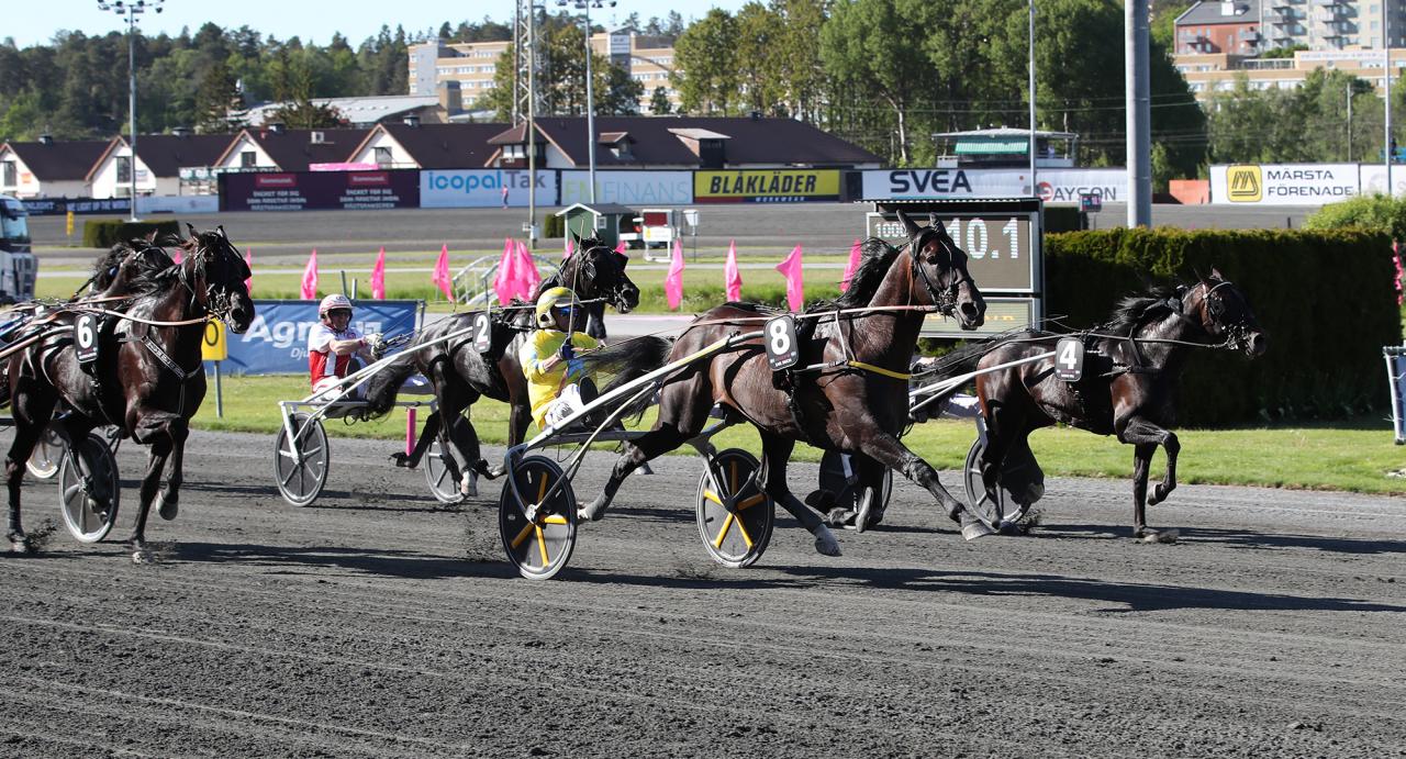 Earl Simon spurtade till enkel seger i sitt Elitloppsförsök. Foto Mathias Hedlund/Sulkysport