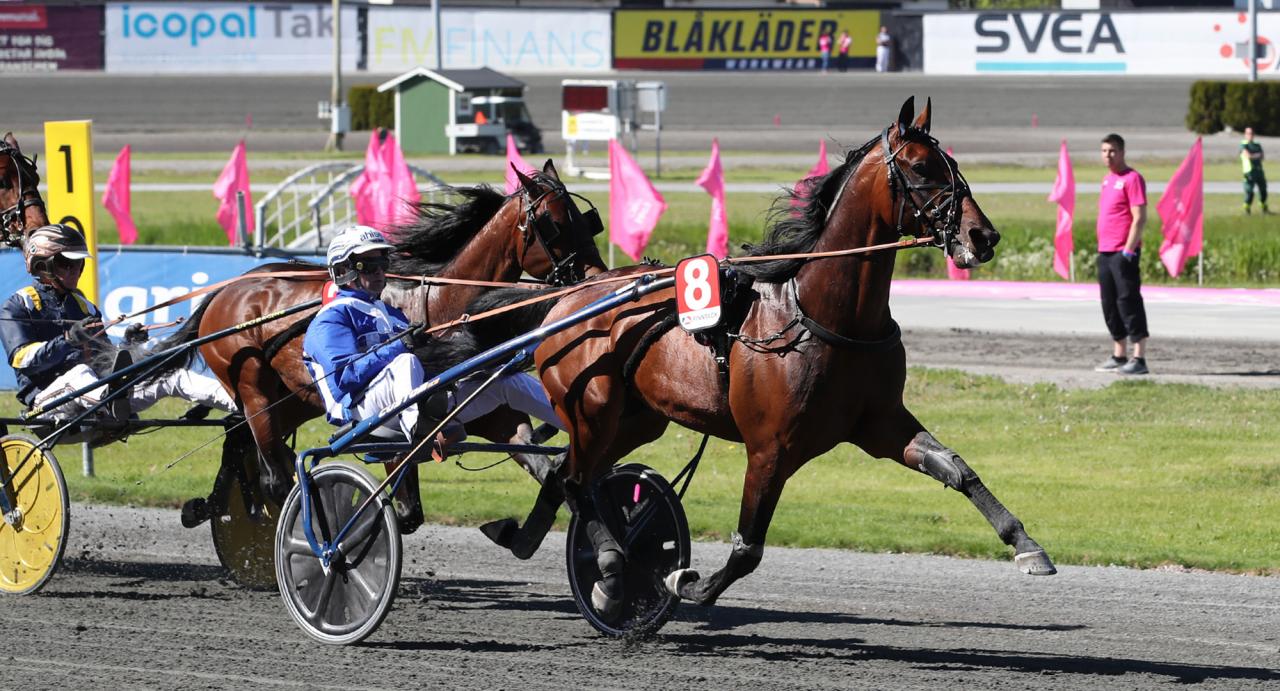 Ecurie D. gillar Solvalla. Åtta segrar och ett andrapris är hästens resultat inför Elitloppet på söndag! Foto Mathias Hedlund/Sulkysport