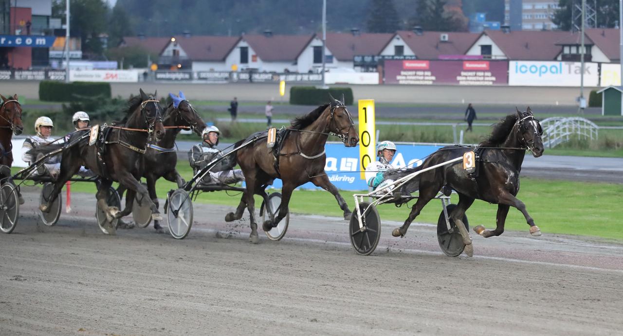 Brambling och Örjan Kihlström i ledning efter 550 meter. Foto Mathias Hedlund/Sulkysport