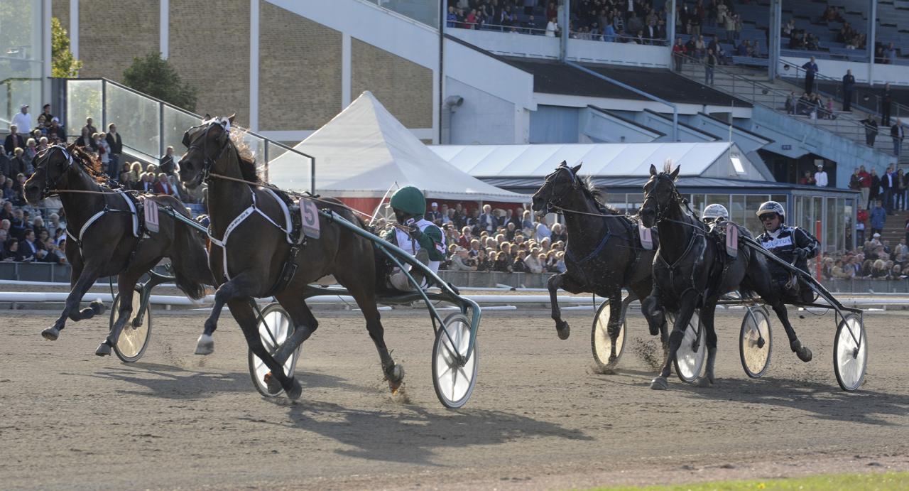 När Maharajah vann Derbyt 2009 var Per-Olof Persson-delägde Staro Cold Carat (1) fyra. I år har han en ny chans med Västerbo Lexington. Foto Leif Norberg/ALN