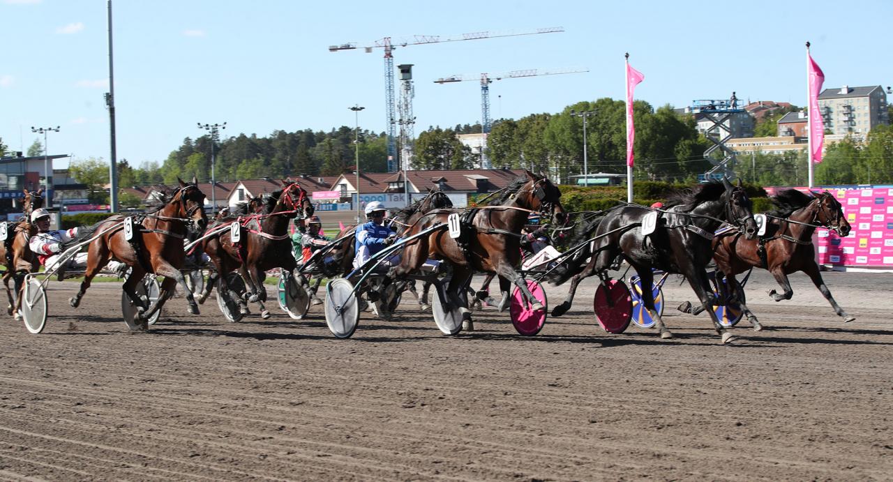 Arquana As (11) spurtade hem Diamantstoets final med minsta möjliga marginal före Beauty Wind (9). Foto: Mathias Hedlund/Sulkysport