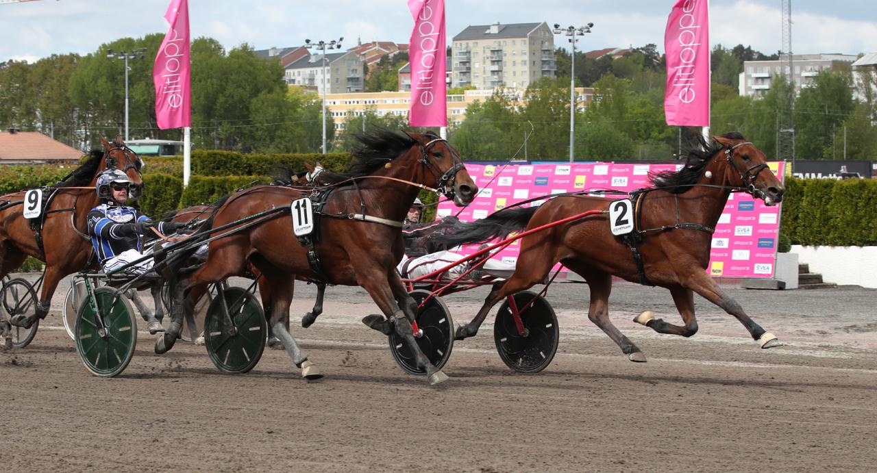 Balla You S.M. (2) vann före Keira de Veluwe (11). Foto: Mathias Hedlund/Sulkysport