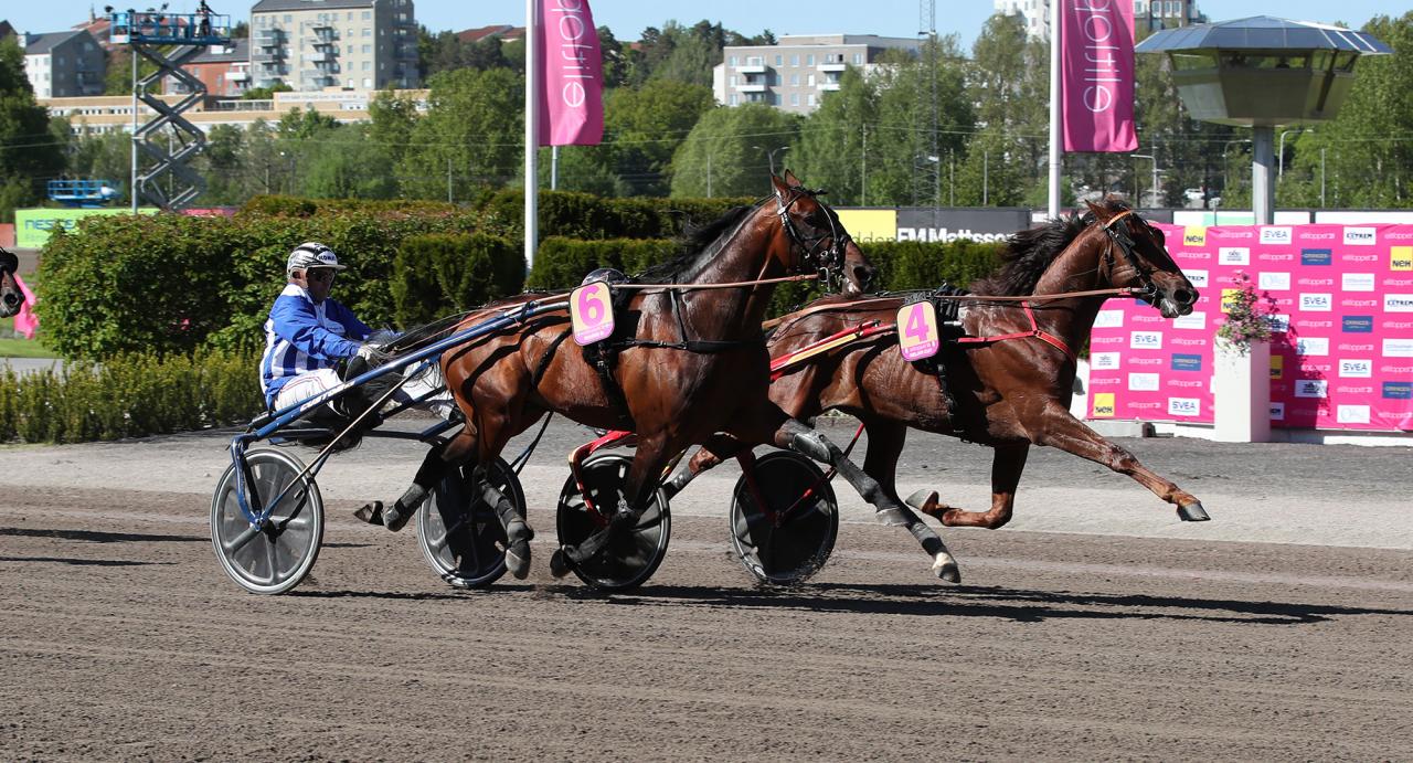 Gabriele Gelorminis Gelati Cut höll ifrån sig Ulf Ohlssons Ecurie D. i det andra Elitloppsförsöket. Foto: Mathias Hedlund/Sulkysport